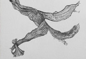 Kim Anderson, Banana, drawing