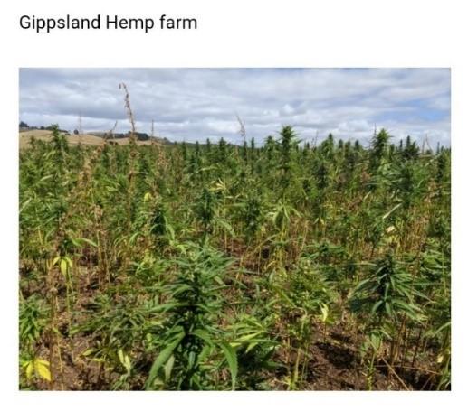 Gippsland hemp farm