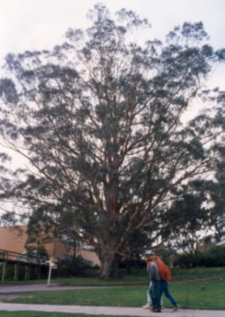 Tree of Knowledge, mid-1990s