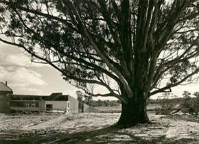 View of Mt Helen Union Building featuring the Tree of Knowledge