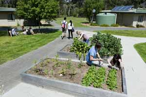 Gippsland Residence Community Vegetable Garden in the middle of South Residences