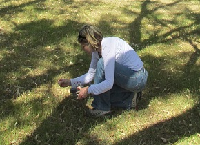Faye in action collecting koala scats