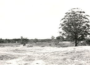 Earthworks at Mt Helen Campus, 1971. Tree of Knowledge on the right hand side