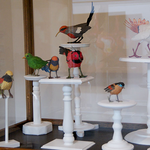 Honours student  Mairin Ni Shiochain's selection of works from 'Natural History Collection' 2012